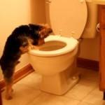 トイレを流す音が気になって、駆け寄ってくるワンコ
