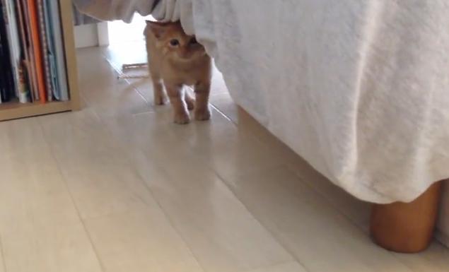 保護された子ネコが翌日初めて、コミュニケーションをとろうと頑張る姿