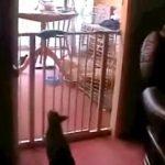 [動画11秒] ジャンプ一発で柵を乗り越えようとしたニャンコが・・・