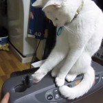 [仁義なき戦い] フタを空ける人間 VS 閉めるネコの激闘