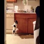 [激写] 飼い主がいないスキに台所でこっそりサンバを踊るワンコ
