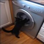 [グルグル] 洗濯機で遊ぶ黒猫ちゃんが可愛い♪
