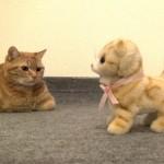 [興味津々] 動くネコのおもちゃが気になる猫たち