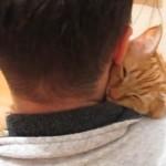 ハグをしながら寝るネコと幸せそうなご主人
