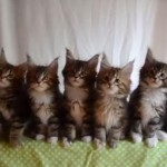 同じ動きをする7匹の猫