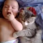 赤ちゃんとジャレ合う猫 [仲良し]