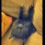 ソファの間にはさまったまま、眠りにおちる子ネコ