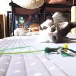 寝ている体勢から、そのまま横っ飛びする猫