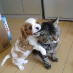 ネコに遊んで遊んでとせがむ子犬