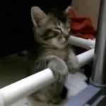 寝落ちする猫ちゃん達はいかがですか?