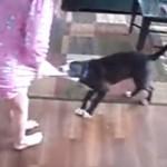 犬が女の子のスカートにじゃれて噛み付くと、正義感の強いネコが・・・
