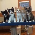 5匹の子猫が踊りだす?!