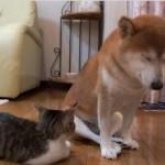 寒い冬の朝、ヒーターの前でくつろぐ子猫と柴犬