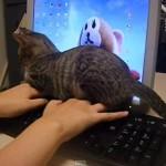 忙しかったので、猫の手を借りてみた・・・