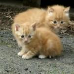 床下から3匹の子猫がヨチヨチ出てきて、楽しそうに遊ぶ姿がカワイ過ぎる