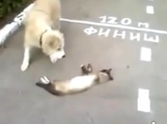 [動画] ネコが倒れていて、犬が心配してかけつけてみると・・・