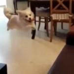 子犬の大ジャンプ!そして・・・