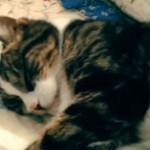 寝ているネコさんをナデナデしたら、もの凄い顔で怒られた