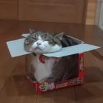 小さな鏡餅の箱に入るニャンコ♪