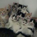 たくさんの子ネコがあらわれた!子ネコたちはジッと見つめている・・・