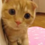 だるまさんが転んだをすると、可愛いネコちゃんが飛び込んできた♪