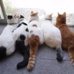 地球の平和を守る、5匹の地球防衛猫
