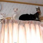 渋滞発生!前にも後ろにもいけない猫たち