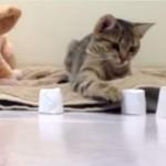 ネコとカップ内ボールあてゲームで遊んでみたら・・・