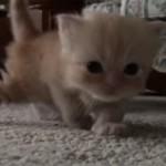 子ネコの冒険(生後三週間)