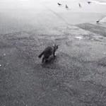 【8秒】 獲物の捕らえられずに必死でごまかすネコちゃん