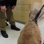 [歓喜] 手術で視力が戻った犬が、飼い主と再開した瞬間