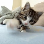 子ネコがカメラを襲っている姿が可愛すぎる