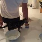 子ネコの前で缶詰をあけたら、フライングして凄い力を出した