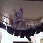 猫につり橋を与えたらハンモックになった