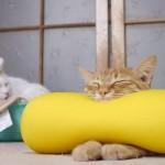 枕と一体化して寝るネコ