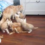母猫と仔猫ちゃん、母猫の失敗で子ネコが一瞬にして消える・・・!?
