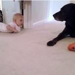 ワンちゃんと遊びたくてハイハイする赤ちゃん、ワンちゃんからご褒美にペロリ♪