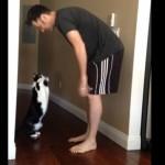 抱っこを要求するネコ