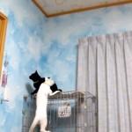 猫が次々に現れるが、最後のニャンコの登場シーンが新しい