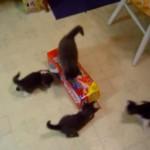 4匹の子猫が協力して空箱と戦う