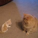 子猫が大きな猫におそるおそるちょっかいを出したら、気まずい雰囲気に