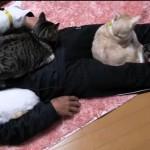 [動画] 寝るだけでネコが集まる!?人間ニャンコホイホイ
