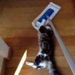 [動画6秒] モップになったネコ
