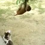 赤ちゃんサルと遊ぶニャンコ