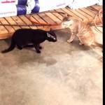 二匹のネコが本気のケンカをしていたら犬のおまわりさんがやってきた♪