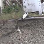 [感動] 崖から落ちた仔猫を母猫が救出する