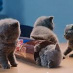ビスケットのCMに出てくる子猫ちゃん達がカワイイ