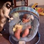 おもちゃを揺らして、赤ちゃんをあやすネコちゃん