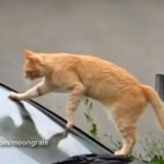 車のフロントガラスを掃除するネコ