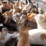 猫の楽園でのランチタイムはお祭りの様だった